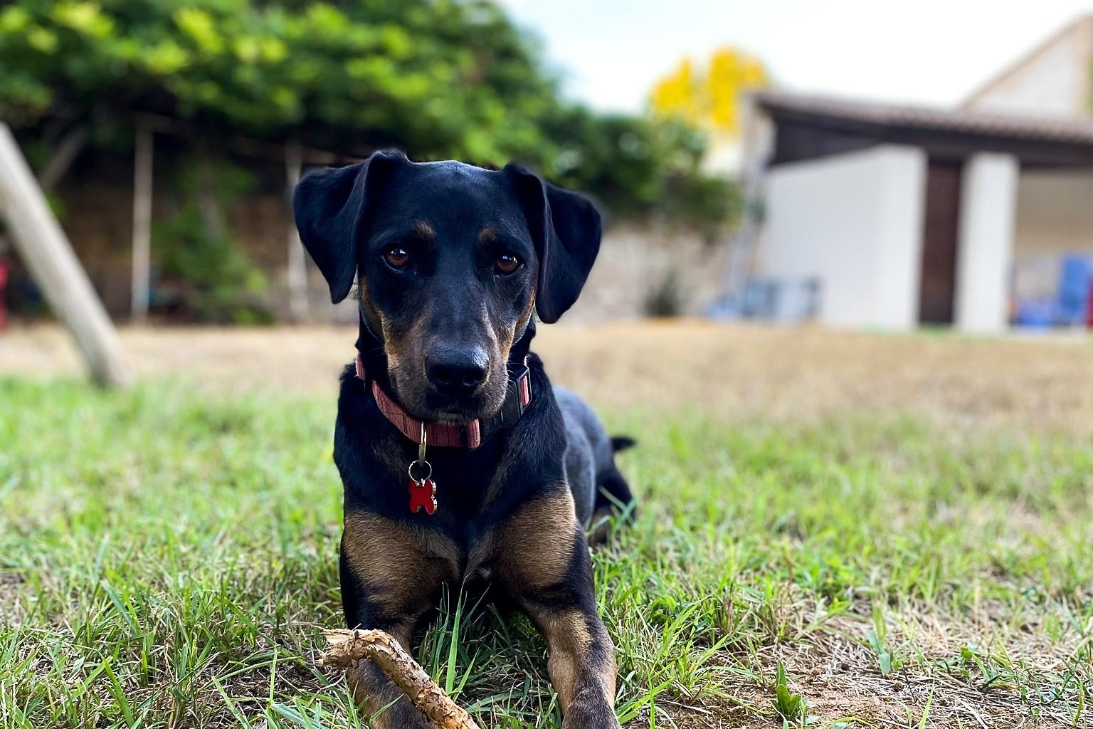 L Adoption De Tsuko Adopter Un Chien A La Spa Mydogsociety